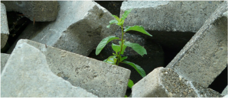 Hope-Green-Plant-Growth-Growing-Surviving-Strong-Strength